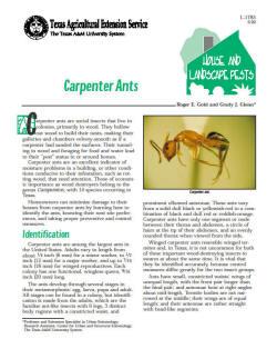 Termites Carpenter Ants